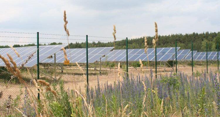 Un nuovo studio dimostra: gli impianti fotovoltaici favoriscono la biodiversità